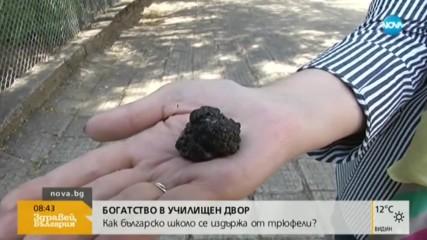 Как българско училище се издържа с трюфели?