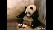 Панда стряска майка си гледайте