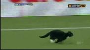 Котка развесели играчите и зрителите на Хераклес - Грьонинген