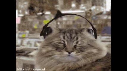 Котки Слушат Музика - Бъдете Като Тях