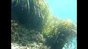 Garabuli underwater 1 Birdfish