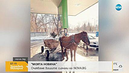 Какво може да прави кон до бензинова колонка?
