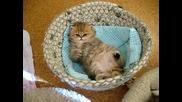 Невероятно сладко котенце