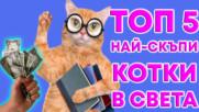 Топ 5 най-скъпи котки в света!