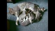 Сладки малки котета с мама