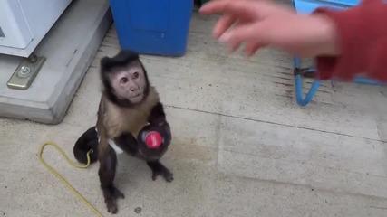 Маймунка купува сок