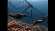 Пука ли ти за Океаните и тяхните обитатели?