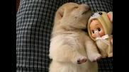 Малко кученце сънува (не е за изпускане)