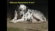 Serpski kucek_petar Raev