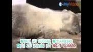 Бялото Мече - Knut