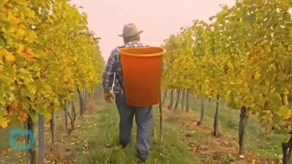 French Winemaker Taking Stand Again Pesticides
