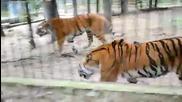 Битката на титаните, големите котенца в действие