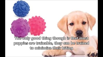 Puppy Biting Factors to Be Considered When Trying to Stop the Biting Habit