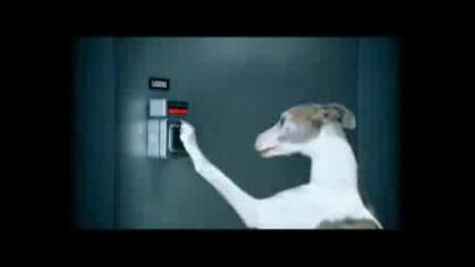 Кучета Тайни Агенти :):)