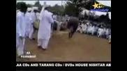 Забавленията На Арабите - Танцуващи Коне!(яко)