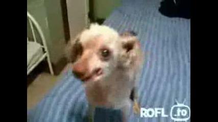 Странно куче смях
