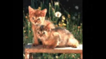 Най - Сладките Котета