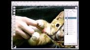 Разкопчаване на котка