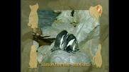 Енциклопедия за животни - Пингвин
