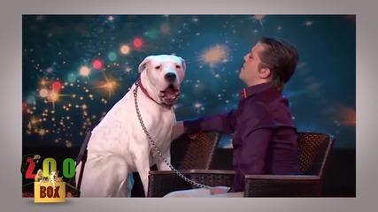 И животните имат талант! Топ музикални изпълнения от дивия свят!