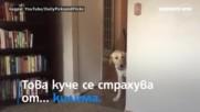 Куче изпитва ужас от килими