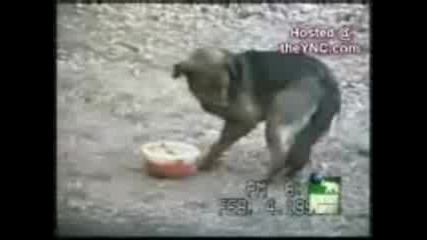 Funny Dogs.3gp