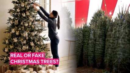 The environmental debate continues: The real vs. fake tree