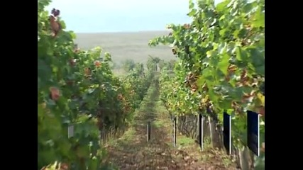 Изтича срокът за кандидатстване от винопроизводителите за европейски средства