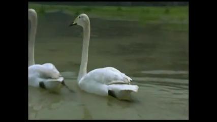 Любэ - Мой лебединый рай ( бг )
