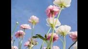 Armik - Flowers simphony