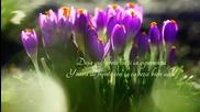Flor Solitaria Chris Spheeris H.d