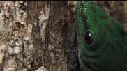 Природна сделка - Насекомото и геконът..