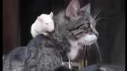 Вечна любов между куче, котка и мишка