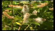 Птичи Песни - Езеро Сегма