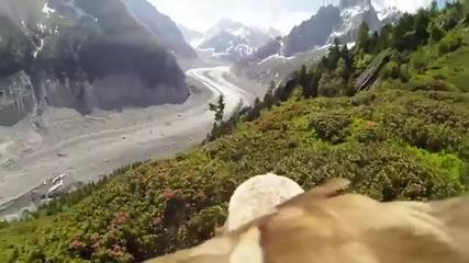Прекрасен момент от полета на орел.