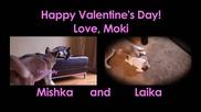 Moki needs a Valentine!!!