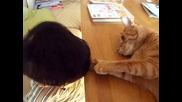 Коте и бебе пораснало 3