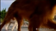 Кученца Скачат На Въже В Синхрон !