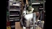 Котки Пеят Jingle Bells