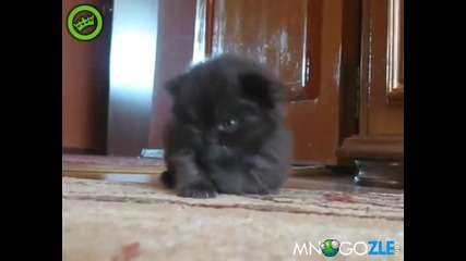 Сладко котенце гледа тъжно