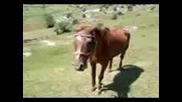 мошен кон