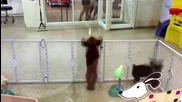 Кученце танцува