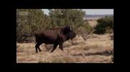 Странни храни в Америка: Ню Мексико ( Бг Аудио )