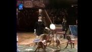 Кучета играят Левски - Цска