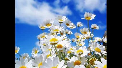 Vivaldi - Spring2