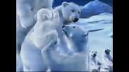 Незабравимата реклама на Кока Кола с полярните мечки