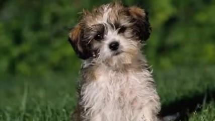 Искам куче детска песничка Vbox7