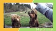 Най-смешните животни в интернет
