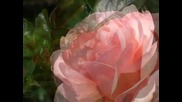 'filled With Love' ~ beautiful roses and relaxing music by Mary Hession
