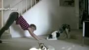 Кучета и котки тренират заедно със своите стопани